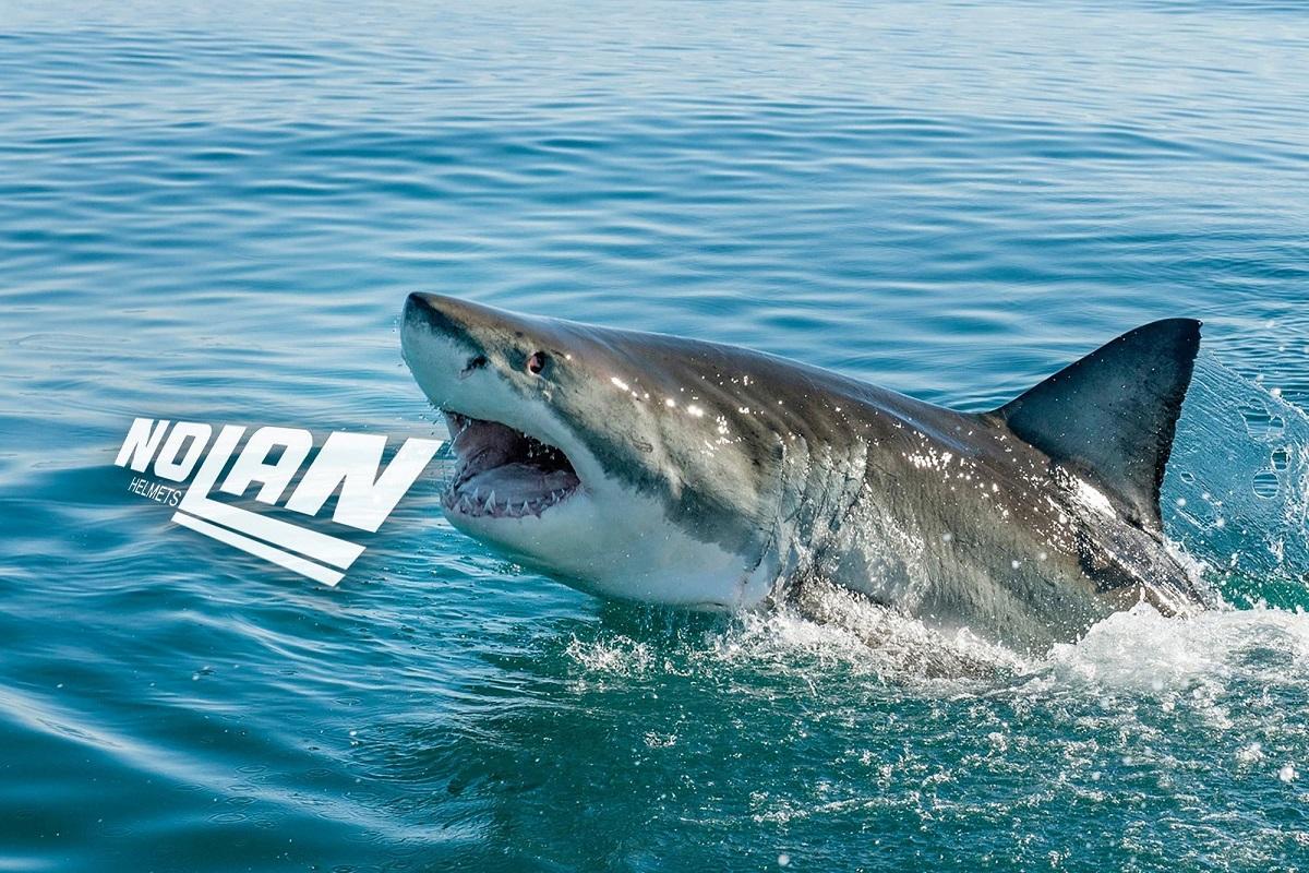 Helm Shark Akuisisi Nolan